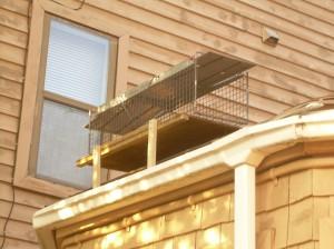 Squirrel trap mounted on gutter platform